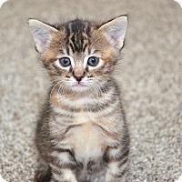 Adopt A Pet :: Pumpkin - Davis, CA