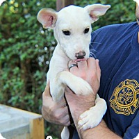 Adopt A Pet :: Spring - Mobile, AL