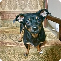 Adopt A Pet :: Vivianne (GA) - Atlanta, GA