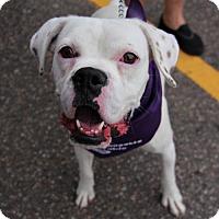 Adopt A Pet :: Maddie - Littleton, CO