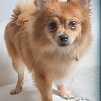 Adopt A Pet :: Otto - Inglewood, CA