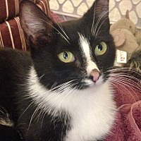 Adopt A Pet :: Fizzy (Soda Pop Litter Mom) - Acworth, GA