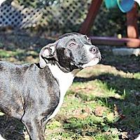 Adopt A Pet :: Aspen - Reisterstown, MD