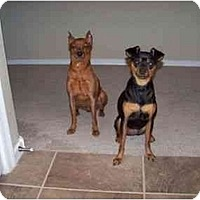 Adopt A Pet :: George and Daisy - Phoenix, AZ