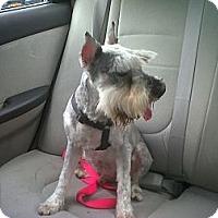 Adopt A Pet :: Dexter - Plainview, NY