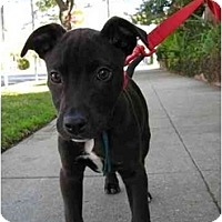 Adopt A Pet :: Harley - Los Angeles, CA