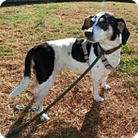 Adopt A Pet :: Madelyn - Calm & Sweet Girl - Quentin, PA