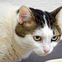 Adopt A Pet :: NINA - Fort Walton Beach, FL
