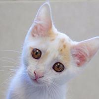 Adopt A Pet :: Dyno - Rossville, TN