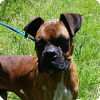 Adopt A Pet :: Lars - Thomasville, NC
