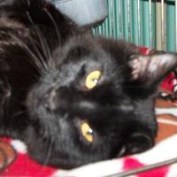 Adopt A Pet :: Joey - Clinton, MO
