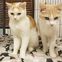 Adopt A Pet :: Braeburn and Cider - DFW Metroplex, TX