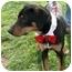Photo 4 - Doberman Pinscher/Rottweiler Mix Dog for adoption in Sacramento, California - Trooper loving
