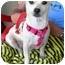 Photo 2 - Chihuahua Mix Dog for adoption in Vista, California - Gigi