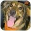 Photo 3 - Collie/Shepherd (Unknown Type) Mix Dog for adoption in Chicago, Illinois - Savannah