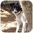 Photo 2 - Border Collie Mix Dog for adoption in Santa Barbara, California - Lovey