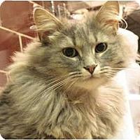 Adopt A Pet :: Daisy - Centerburg, OH