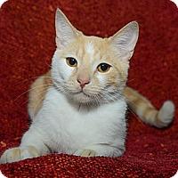 Adopt A Pet :: Scotty - New York, NY