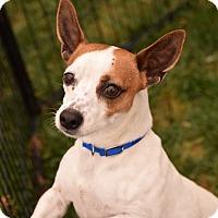 Adopt A Pet :: Draymond - Meridian, ID