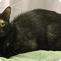 Adopt A Pet :: Linda - Seminole, FL