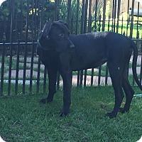 Adopt A Pet :: Winnipeg - Evergreen, CO