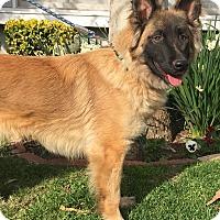 Adopt A Pet :: Marley - Van Nuys, CA