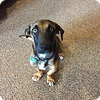 Adopt A Pet :: Avis - Doylestown, PA