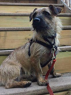 Dachshund Mix Dog for adoption in Minneapolis, Minnesota - Storm