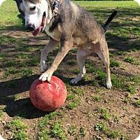 Adopt A Pet :: Indigo - Chico, CA