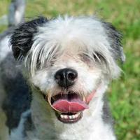 Adopt A Pet :: KiKI - Englewood, FL