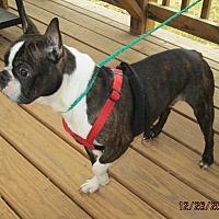 Adopt A Pet :: HOOTIE - Oswego, NY