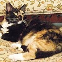 Adopt A Pet :: Margo - Youngsville, NC