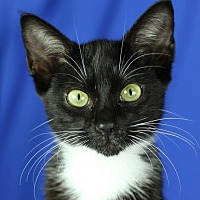 Adopt A Pet :: Hope - Winston-Salem, NC