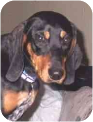 Coonhound (Unknown Type) Mix Dog for adoption in Cincinnati, Ohio - Ellie May