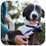 Photo 1 - Labrador Retriever/Border Collie Mix Dog for adoption in Los Angeles, California - Noelle