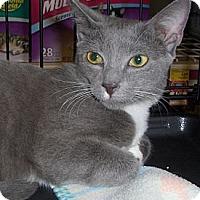 Adopt A Pet :: Corky - Richmond, VA