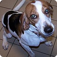 Adopt A Pet :: William - Jackson, MI