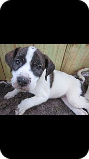 Hound (Unknown Type) Mix Puppy for adoption in West Palm Beach, Florida - Zoe