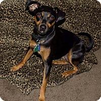 Adopt A Pet :: Carly - Topeka, KS