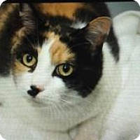 Adopt A Pet :: Patch Susie - Monroe, GA