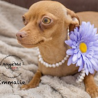 Adopt A Pet :: EMMALIE - Inland Empire, CA