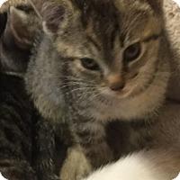 Adopt A Pet :: Rachel - Weatherford, TX