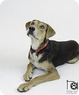 Beagle Mix Dog for adoption in Parsippany, New Jersey - HAZEL