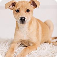 Adopt A Pet :: Robin - Portland, OR