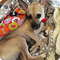 Adopt A Pet :: Radar - Alpharetta, GA