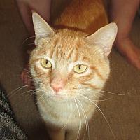 Adopt A Pet :: Leonardo - San Bernardino, CA