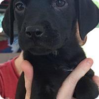 Adopt A Pet :: Kalani - Louisville, KY