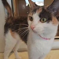 Adopt A Pet :: Aster - Fremont, OH