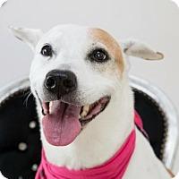 Adopt A Pet :: Bertie - Fort Lauderdale, FL