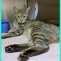 Adopt A Pet :: PAIGE-avail 8/17 - Marietta, GA